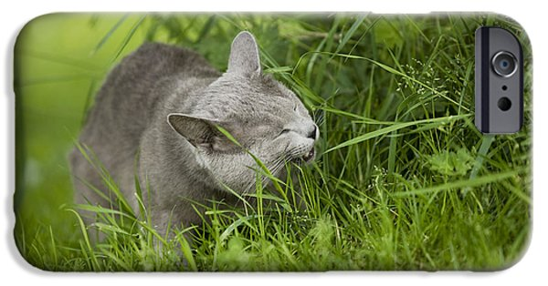 Gray Hair iPhone Cases - Chartreux Cat And Grass iPhone Case by Jean-Michel Labat