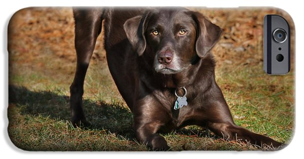 Chocolate Lab Digital Art iPhone Cases - Chase Me iPhone Case by Lori Deiter