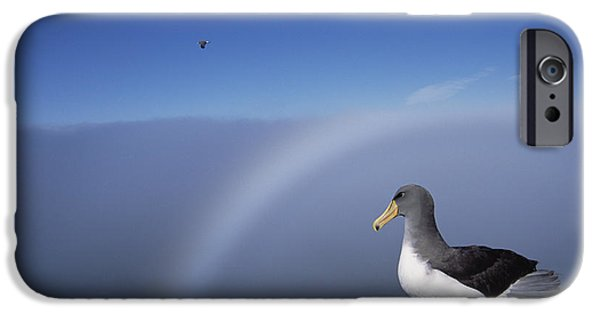 Chatham iPhone Cases - Chatham Albatross On Cliff Edge Chatham iPhone Case by Tui De Roy