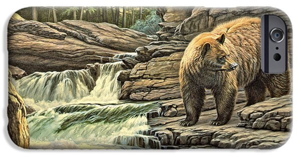 Bear iPhone Cases - Checking Downstream       iPhone Case by Paul Krapf