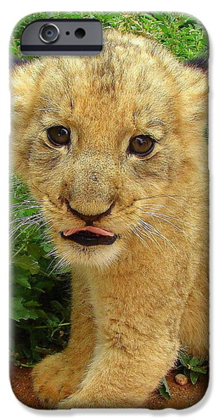 Wildlife Imagery iPhone Cases - Cheeky Cub iPhone Case by Ramona Johnston