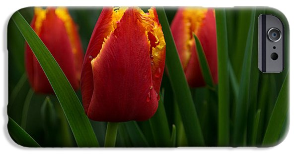 Ruby Garden Jewel iPhone Cases - Cheerfully Wet Red and Yellow Tulips iPhone Case by Georgia Mizuleva