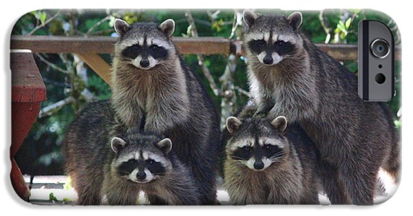 Four Animal Faces iPhone Cases - Cheerleading Raccoons iPhone Case by Kym Backland