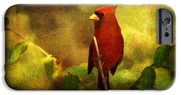 States iPhone Cases - Cheery Red Cardinal  iPhone Case by Lianne Schneider