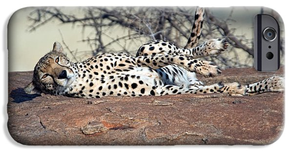 East Africa Photographs iPhone Cases - Cheetah Acinonyx Jubatus Resting iPhone Case by Panoramic Images