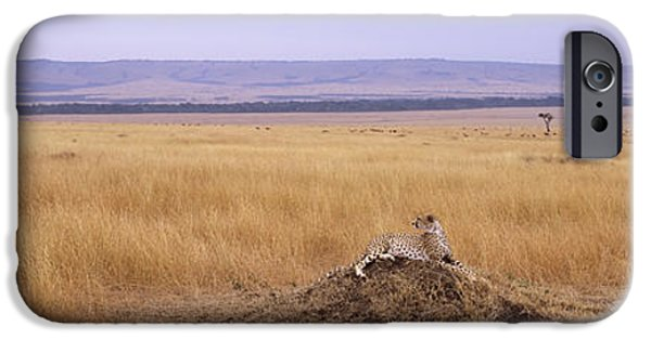 Mounds iPhone Cases - Cheetah Acinonyx Jubatus Sitting iPhone Case by Panoramic Images