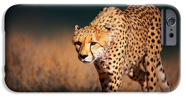 Front iPhone Cases - Cheetah approaching from the front iPhone Case by Johan Swanepoel