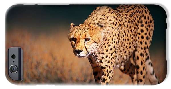 Close iPhone Cases - Cheetah approaching from the front iPhone Case by Johan Swanepoel