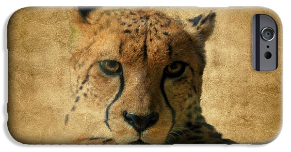 Fury iPhone Cases - Cheetah  iPhone Case by Athena Mckinzie