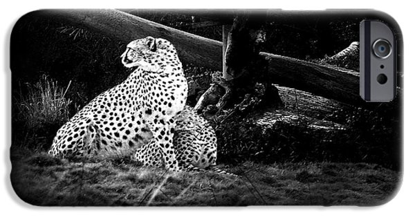 Cheetah Digital Art iPhone Cases - Cheetah iPhone Case by Camille Lopez