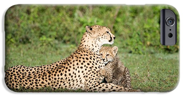 East Africa Photographs iPhone Cases - Cheetah Cub Acinonyx Jubatus Playing iPhone Case by Panoramic Images