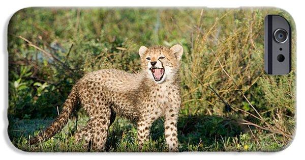 Fauna iPhone Cases - Cheetah Cub Acinonyx Jubatus Yawning iPhone Case by Panoramic Images