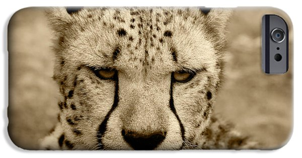 Wilderness Pyrography iPhone Cases - Cheetah iPhone Case by Modern Art Prints