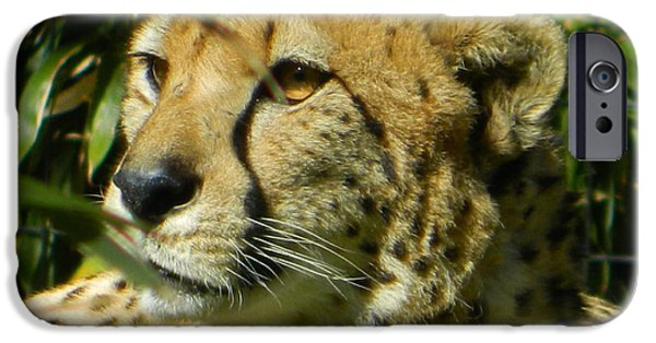 Cheetah Digital Art iPhone Cases - Cheetah In A Daze iPhone Case by Emmy Marie Vickers