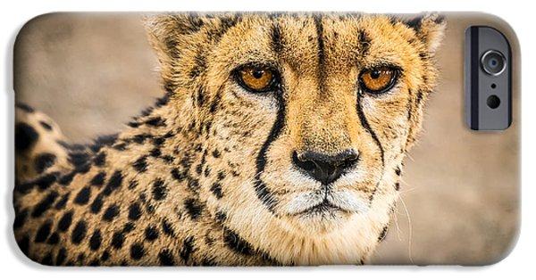Carnivore iPhone Cases - Cheetah Portrait iPhone Case by Duane Miller