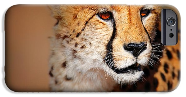 Fast iPhone Cases - Cheetah portrait iPhone Case by Johan Swanepoel