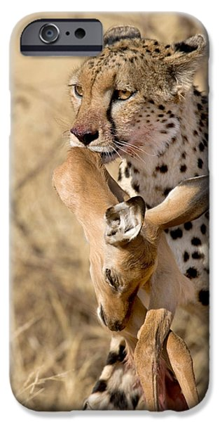 Fauna iPhone Cases - Cheetahs Acinonyx Jubatus And Prey iPhone Case by Panoramic Images
