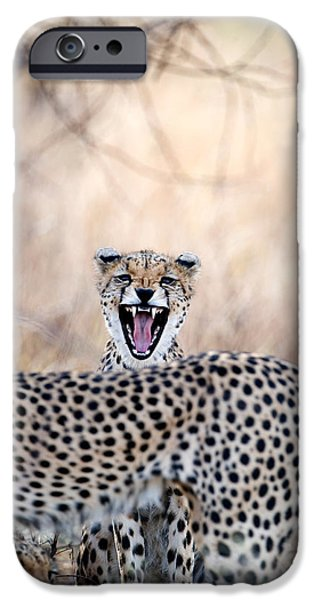 Fauna iPhone Cases - Cheetahs Acinonyx Jubatus Resting iPhone Case by Panoramic Images