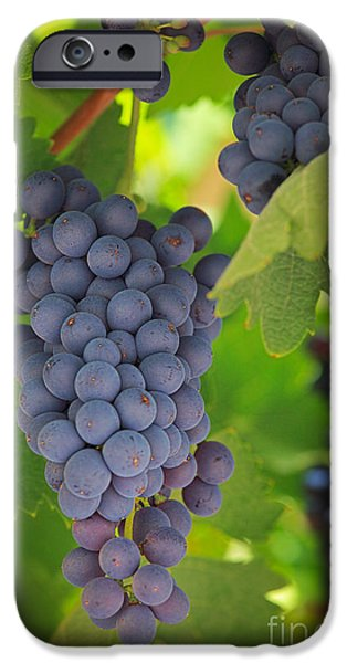 Viticulture iPhone Cases - Chelan Blue Grapes iPhone Case by Inge Johnsson