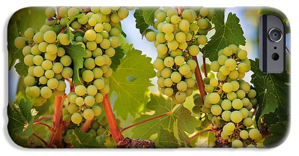 Plantation iPhone Cases - Chelan Grapevines iPhone Case by Inge Johnsson