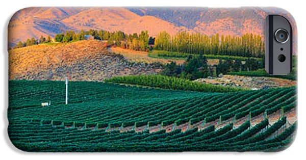Ripe Photographs iPhone Cases - Chelan Vineyard Panorama iPhone Case by Inge Johnsson