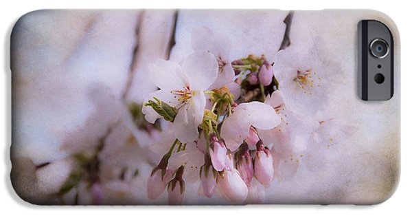 Innocence iPhone Cases - Cherry Blossom Dreams iPhone Case by Terry Rowe