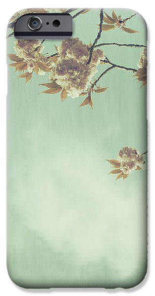 Cherry Blossom in Fulwood Park iPhone Case by Nomad Art And  Design