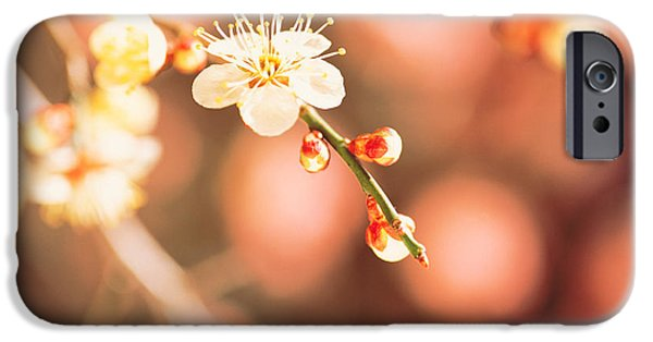 Close Focus Nature Scene iPhone Cases - Cherry Blossom In Selective Focus iPhone Case by Panoramic Images