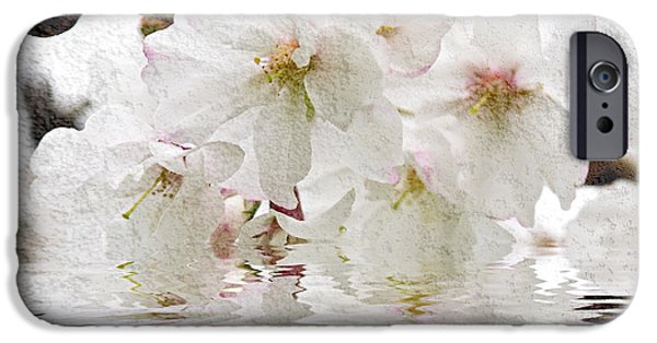 Blossom iPhone Cases - Cherry blossom in water iPhone Case by Elena Elisseeva