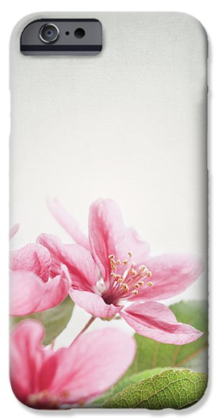 Cherry Blossom iPhone Case by Jelena Jovanovic
