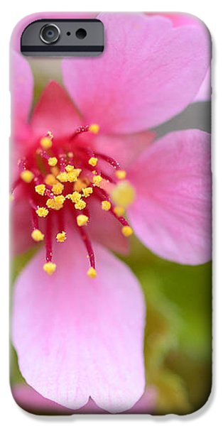 Cherry Blossom iPhone Case by Lisa  Phillips