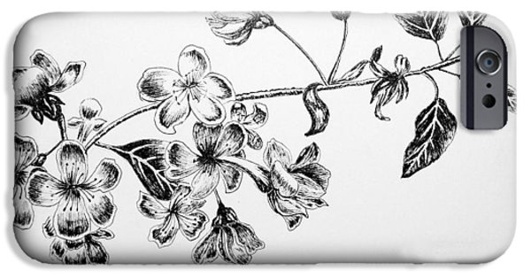 Cherry Blossoms Drawings iPhone Cases - Cherry Blossom iPhone Case by Rahul Jain