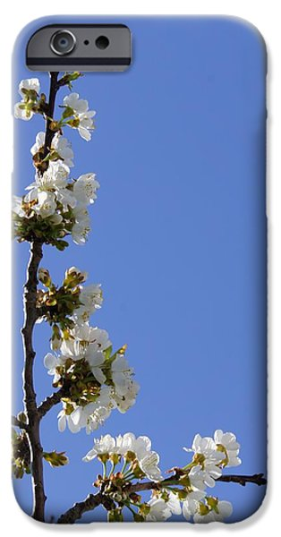 Tree iPhone Cases - Cherry Blossom iPhone Case by Sheela Ajith