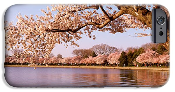 Cherry Blossoms iPhone Cases - Cherry Blossom Tree Along A Lake iPhone Case by Panoramic Images