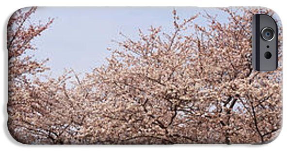 Cherry Blossoms iPhone Cases - Cherry Blossom Trees And Willow Tree iPhone Case by Panoramic Images
