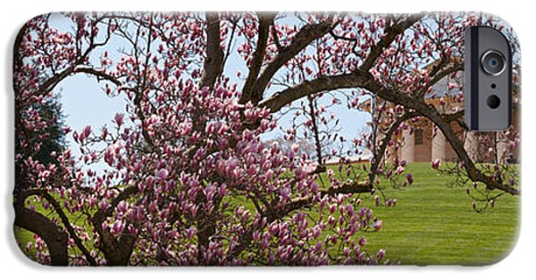 Cherry Blossoms iPhone Cases - Cherry Blossom Trees At The Gravesite iPhone Case by Panoramic Images