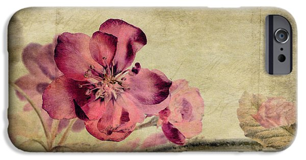 Stamen Digital iPhone Cases - Cherry Blossom with Textures iPhone Case by John Edwards