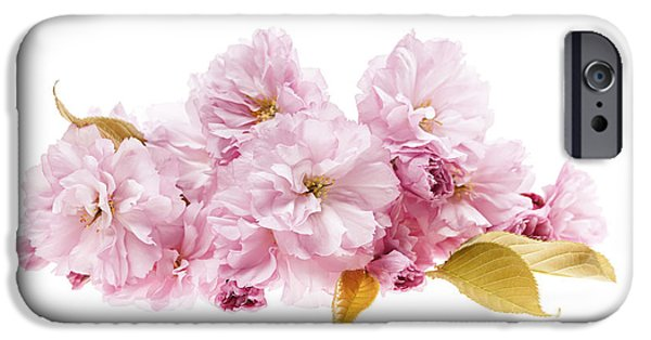 Cherry Blossoms Photographs iPhone Cases - Cherry blossoms arrangement iPhone Case by Elena Elisseeva