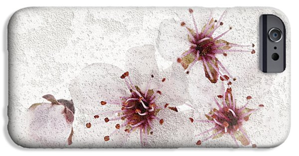 Cherry Blossoms Photographs iPhone Cases - Cherry blossoms close up iPhone Case by Elena Elisseeva