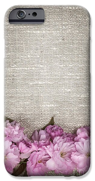 Cherry Blossoms Photographs iPhone Cases - Cherry blossoms on linen  iPhone Case by Elena Elisseeva