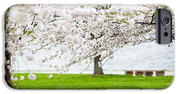 Cherry Blossoms Photographs iPhone Cases - Cherry blossoms on the shore of Fort McHenry iPhone Case by Susan  Schmitz