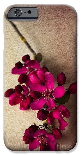 Cherry Blossoms iPhone Cases - Cherry Pie iPhone Case by Jan Bickerton