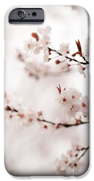 Rosaceae iPhone Cases - Cherry Plum Blossom iPhone Case by Anne Gilbert