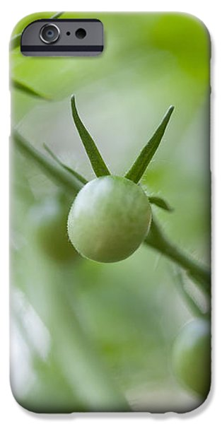 Cherry Tomatoes iPhone Case by Kay Pickens
