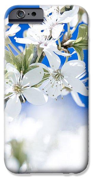 Cherry tree blossom  iPhone Case by Raimond Klavins