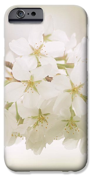 Cherry Tree Blossoms iPhone Case by Sandy Keeton