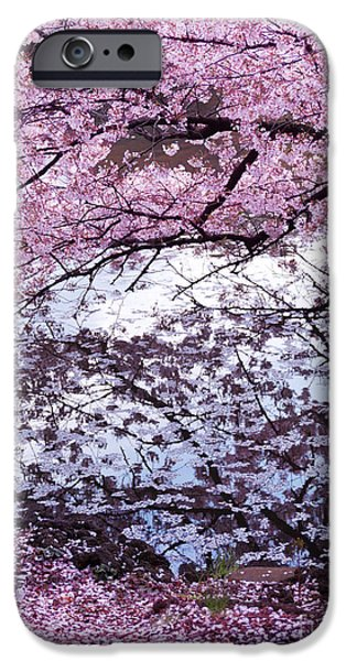 Garden Scene iPhone Cases - Cherry tree branches with pink blossom touching water iPhone Case by Oleksiy Maksymenko