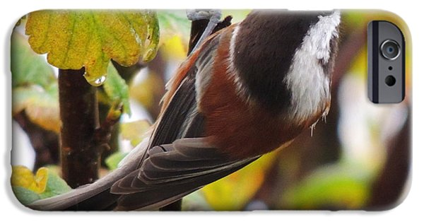 Autumn iPhone Cases - Chestnut-backed Chickadee iPhone Case by Karen Horn