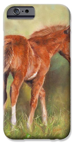 Young Paintings iPhone Cases - Chestnut Foal iPhone Case by David Stribbling