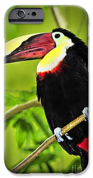 Aviary iPhone Cases - Chestnut Mandibled Toucan iPhone Case by Elena Elisseeva